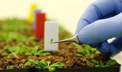 نانوحسگری برای تشخیص کم آبی در گیاهان فراوری شد